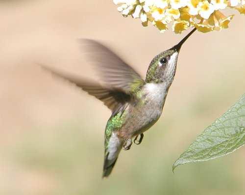 Риси пристосованості птахів до