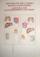 Робота з малюнками на уроках біології