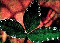 Форми води у рослині