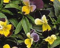 Дохристиянські вірування українського народу про рослин