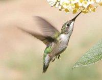 Риси пристосованості птахів до польоту
