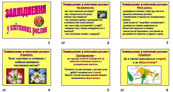 """Презентація """"Запліднення у квіткових рослин"""" (для 7 кл.)"""