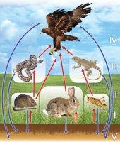 Вплив чинників середовища на тварин.