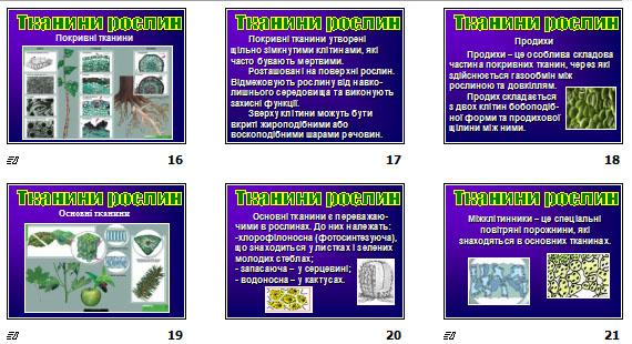 """Презентація """"Різноманітність тканин живих організмів"""" для 10 класу"""