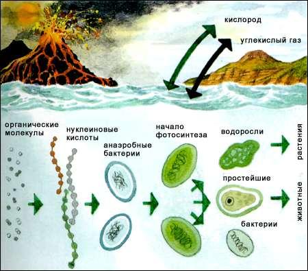 будова клітин прокаріот;