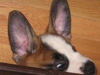 Вуха, вуха, вуха!