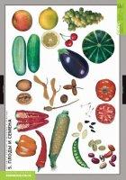 """Всі розробки уроків теми """"Розмноження та розвиток рослин"""" для 7 кл."""