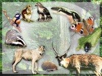 """Всі розробки уроків до теми """"Будова і життєдіяльність тварин"""" для 8 кл."""
