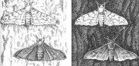 """Розробки уроків до теми """"Основи еволюційного вчення"""" для 11 кл (універсальний профіль)"""
