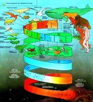 """Розробки уроків до теми """"Основи еволюційного вчення"""