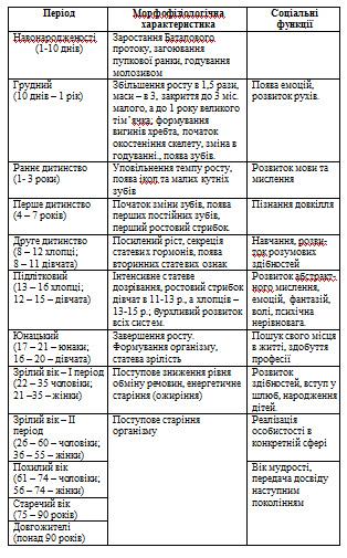 Сперматогенез таблиця