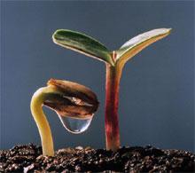 Класифікація вікових особливостей рослин.