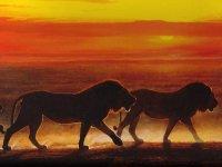 Світло як умова орієнтації тварин.