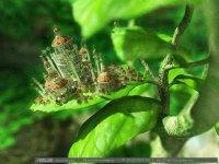 """Розробки уроків до теми """"Будова та життєдіяльність рослин"""" для 7 кл."""