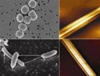 """Розробки уроків до теми """"Бактерії"""" для 7 кл."""