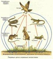 """Розробки уроків до теми """"Організми і середовище існування"""" для 8 кл."""