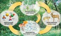 Розробки уроків до теми «Надорганізмені рівні життя» для 11 кл. (філологічний профіль)