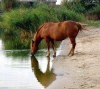 Матеріали до уроків біології тварин «Шляхи постачання та втрати води в організмі тварин».