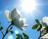 Матеріали про температурні адаптації рослин