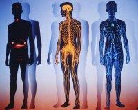 Що цікавого можна дізнатися про організм людини?