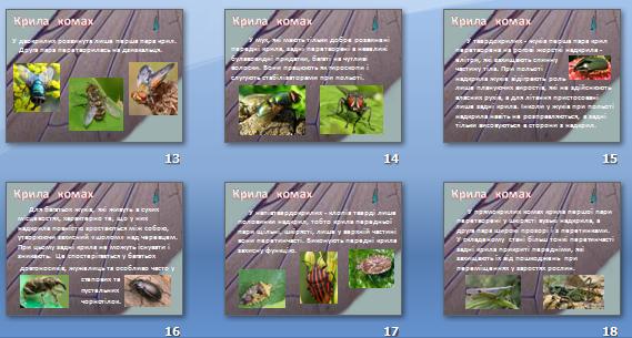 Презентація «Крила комах» для 8 кл.