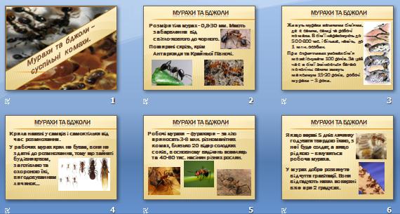 Презентація «Мурахи та бджоли – суспільні комахи» (8 кл.)