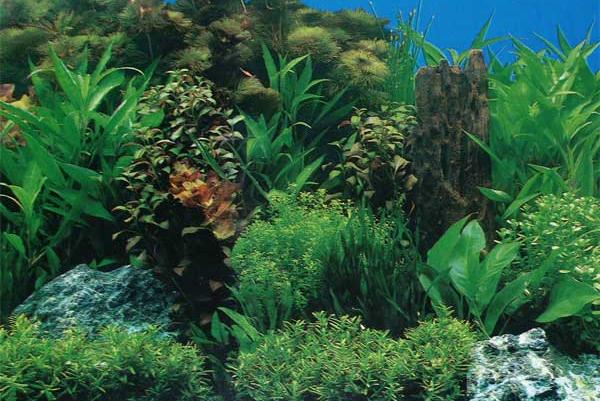Відмінні ознаки водоростей у рамках