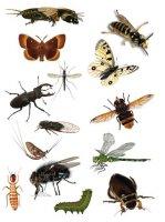 Матеріали до уроків біології тварин (8 кл.) про характерні особливості типу Членистоногі тварини.