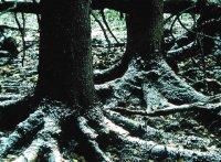 Адаптації рослин до підтримання водного балансу.