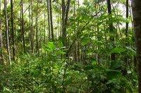 Екологічні групи рослин по відношенню до води