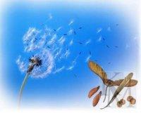 Матеріали до уроків «Пристосування організмів до наземно-повітряного середовища» (11 кл.)