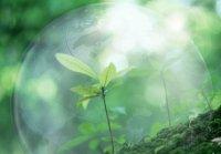 Особливості дихання рослин