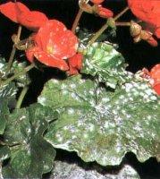 Чи хворіють рослини?