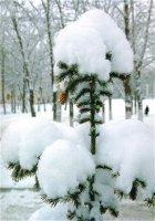 Як дерева готуються до зими?