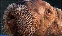 Ластоногі ссавці та їхні характерні особливості, що дозволили пристосуватися до водного способу життя.