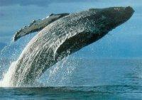 Відмінні ознаки ряду Китоподібні, які дозволяють їм мешкати виключно у воді.