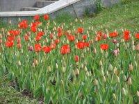 Відмінні ознаки покритонасінних рослин.