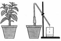 Поглинання води рослиною (для 7 кл.)