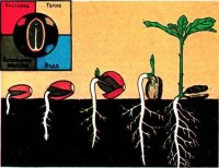Умови проростання насіння (матеріали для 7 кл.)