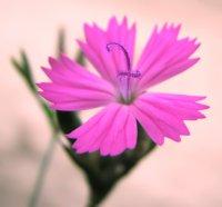 Символіка кольору квітів в українців