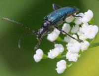 Особливості будови, процесів життєдіяльності та розмноження комах, які дозволили їм стати панівною групою тварин на планеті (до уроків 8 кл.)
