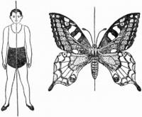 Симетрії тіла тварин та їх формування.