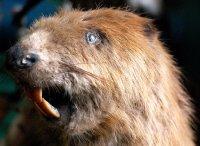 Особливості будови зубної системи хордових тварин