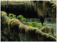 Грунтові екологічні фактори