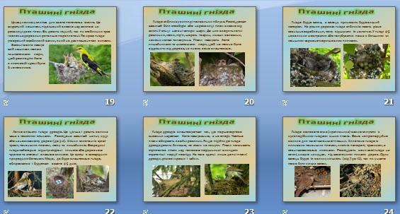Презентація «Пташині гнізда»