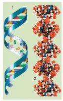 """Розробки уроків до теми """"Молекулярний рівень організації життя"""" 10 кл."""