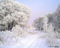Сезонні зміни у житті рослин.