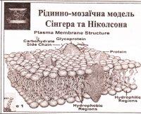"""Розробки уроків до теми """"Клітинний рівень організації життя"""" (10 кл.)"""