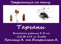 Презентація «Таргани»