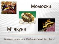 Презентація «Молюски або М'якуни»